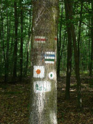 Dużo szlaków turystycznych najednym drzewie